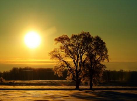 morning-sun